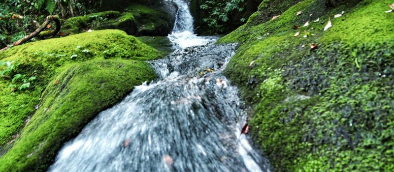 Чар Дхам: путешествие к четырём гималайским вершинам. Бадринатх.